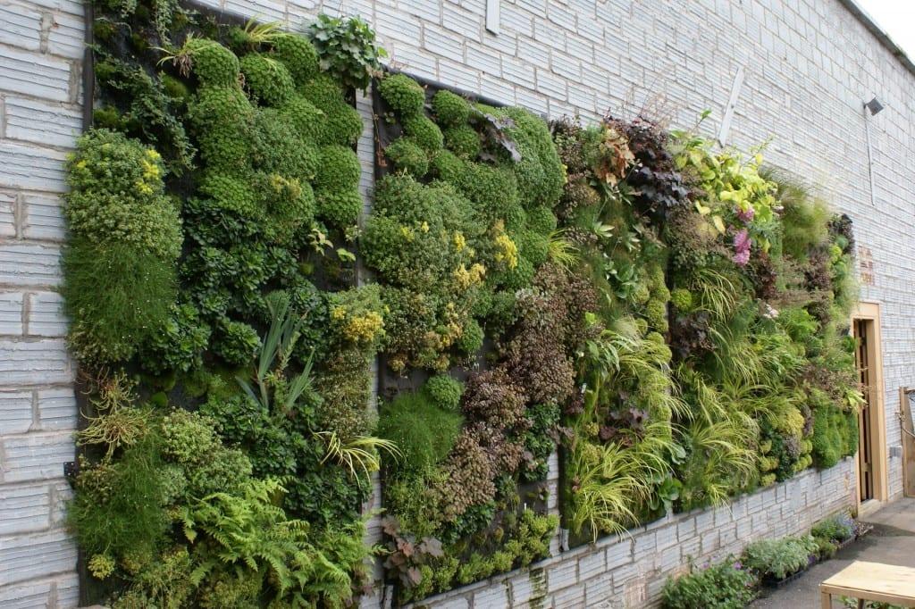 Diseño y construcción de jardines verticales y horizontales – Verdesign